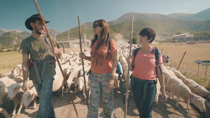 campo ovejas paisaje españa pirineos pastor entre ovejas tve nolich rodaje